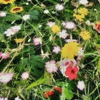 Bunte Blumenwiese Digitaldruck
